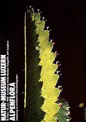 Steinemann Tino / Clemenz Philipp - Alpenflora